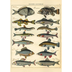 Natural History Fish Poster Wrap