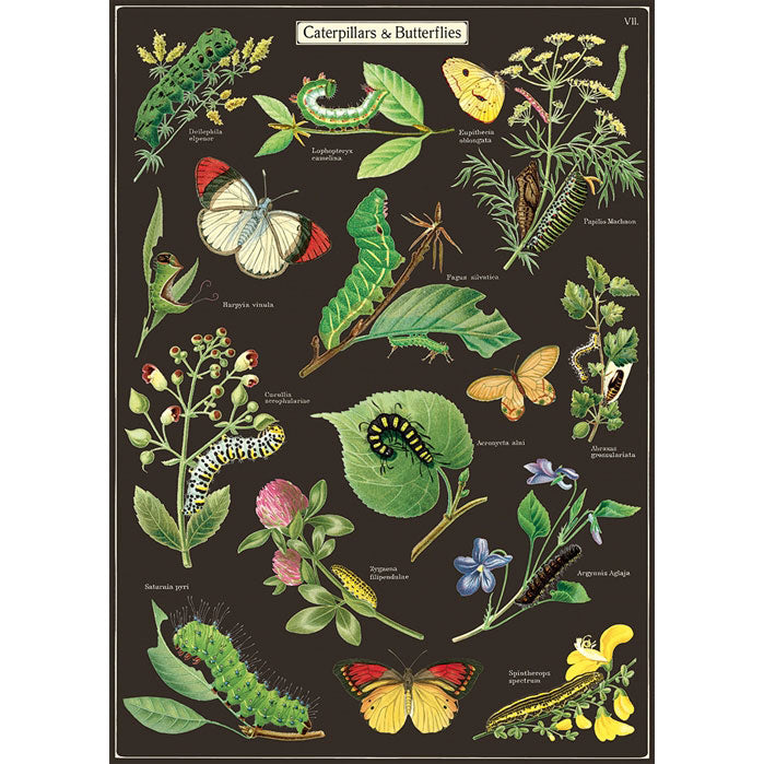 Caterpillars & Butterflies Poster Wrap