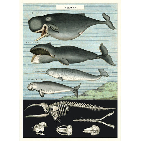Whale Chart Poster Wrap