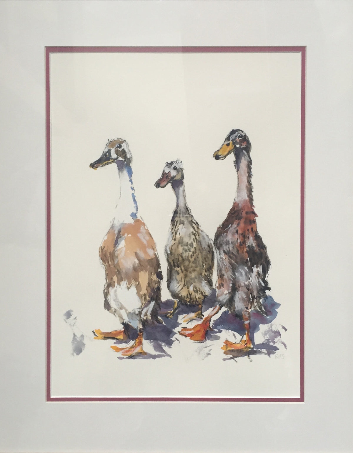 Runner Ducks