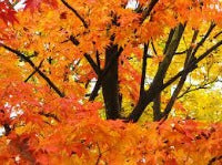 Homeopathic remedies for the fall season