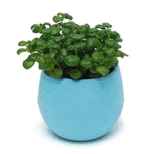 Mini Colorful Round Plastic Plant/Flower Pot For Garden Home/Office