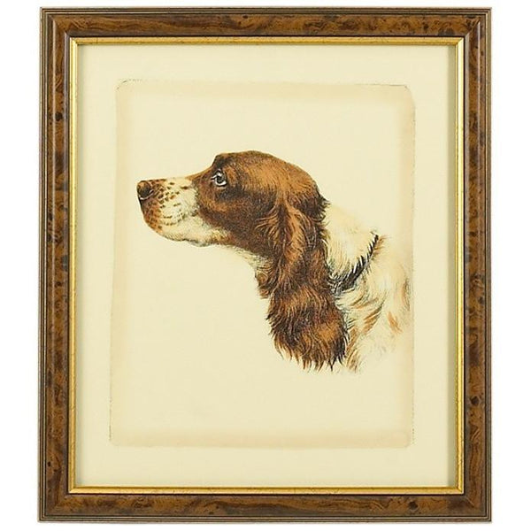 Danchin Brittany Spaniel Hand Colored Print