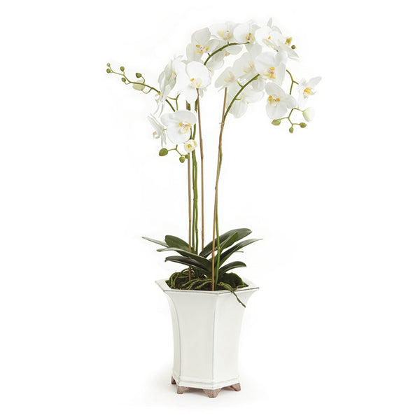 Barclay Butera Phalaenopsis in Ceramic Pot 36″ CC252