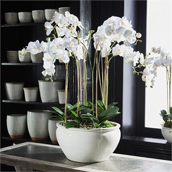 Barclay Butera Phalaenopsis in Ceramic Bowl 36″ CC254