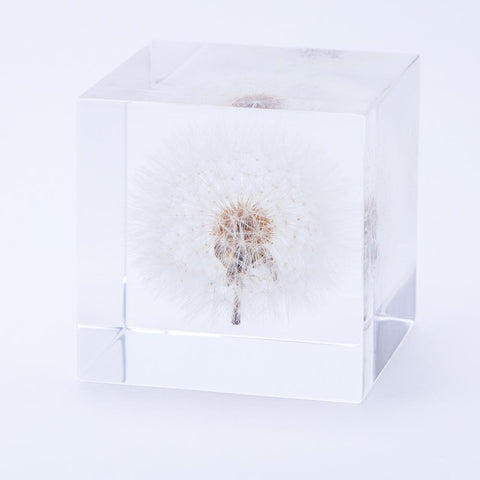 SOLA CUBE PLANT