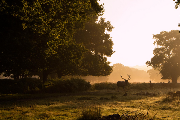 Best Places to Spend the August Bank Holiday - Richmond Park