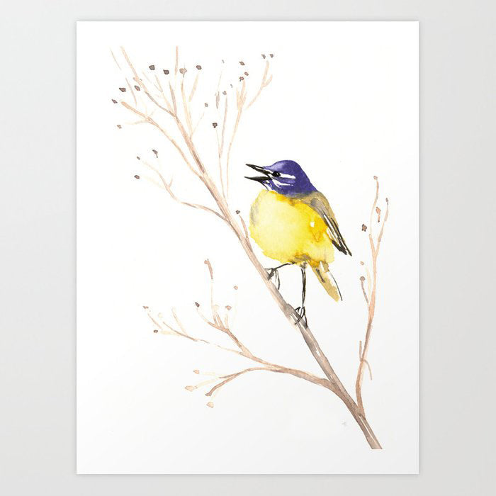 Yellow Wagtail Watercolor Painting - Song Bird Wildlife Art Print