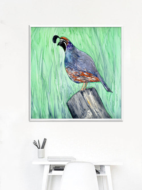 Watercolor Painting - California Quail - Valley Bird Art Print - Brazen Design Studio