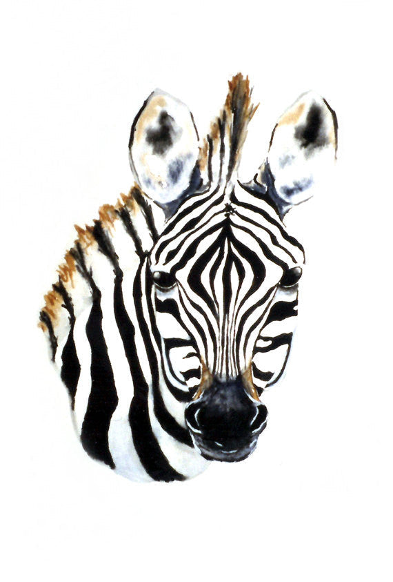 Watercolor Painting - Zebra Foal African Wildlife Art Print - Brazen Design Studio
