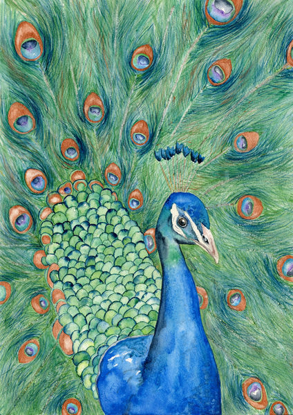 Watercolor Painting - Peacock Art - Wildlife Bird Art Print - Canvas or Paper Print - Brazen Design Studio