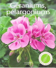Géraniums, pélargoniums