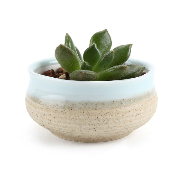Cutesy Color Planters - Apartment 201