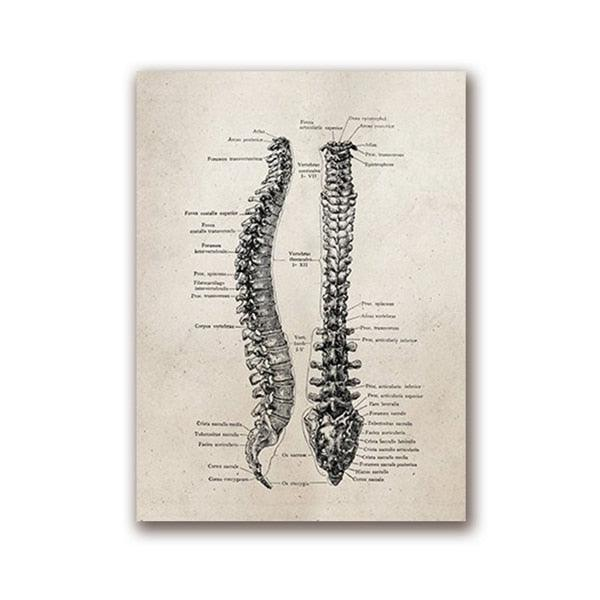 Human Anatomy Vintage Posters - Apartment 201