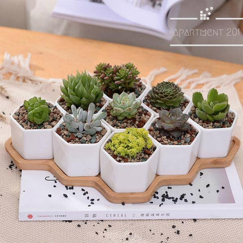 Set of 9 Hexagon Planters - Apartment 201