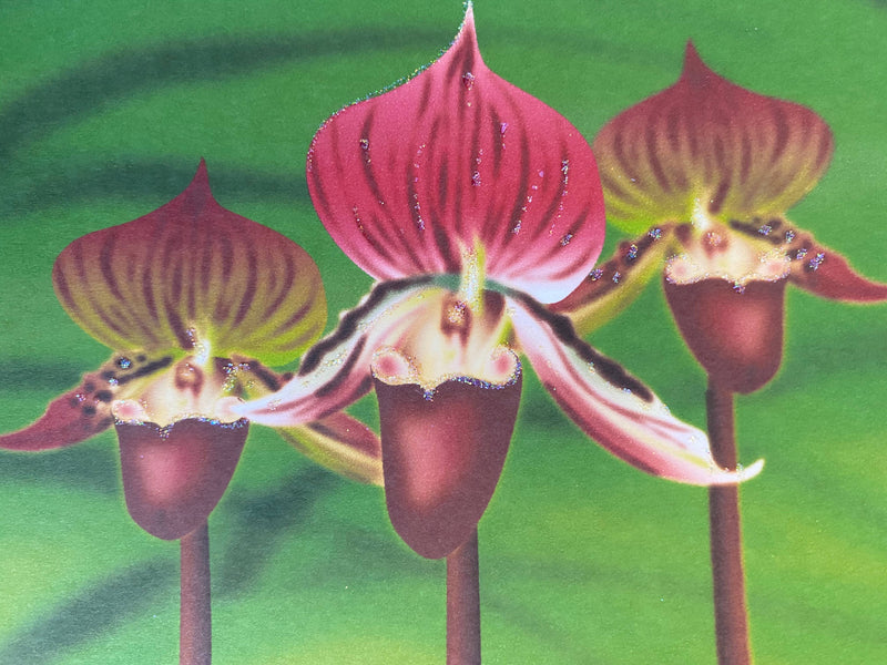 Lady Slipper Flower, Everyday Card