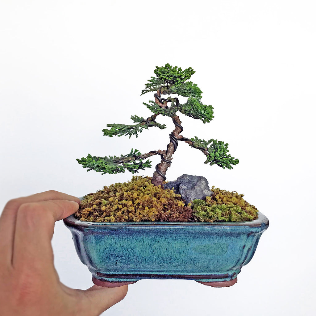 Japanese Cypress Bonsai