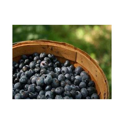 Blueberry - Highbrow E-Liquid