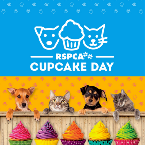 Get Your Bake On This Cupcake Day!