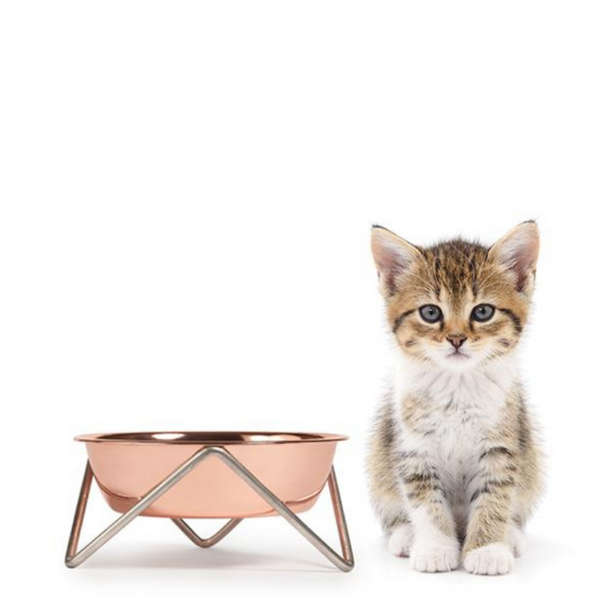 Meow Bowl | Copper