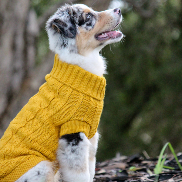 Chunky Knit Dog Jumper | Mustard
