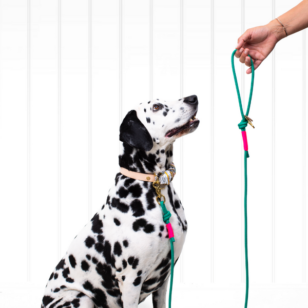 Dog Rope Lead | San Jose