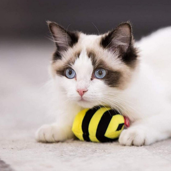 GiGwi Melody Chaser Cat Toy | Bee | Peticular