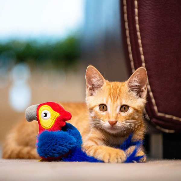 GiGwi Melody Chaser Cat Toy | Parrot | Peticular