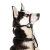 The Company Of Animals HALTI OptiFit Headcollar | Peticular
