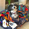 Designer Pet Blanket | Mexican Skulls