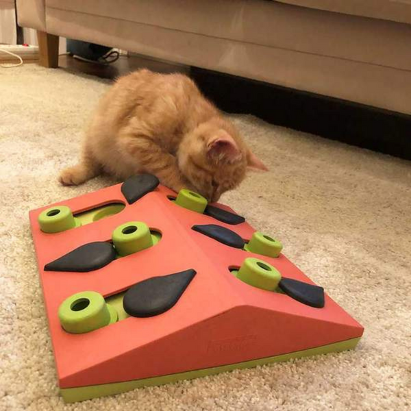 Melon Madness Puzzle & Play | Cat Toy