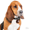 My Family Pet ID Tag | Basset Hound + FREE Engraving | Peticular