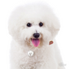My Family Pet ID Tag | Bichon Frise + FREE Engraving | Peticular