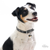 My Family Pet ID Tag | Jack Russell + FREE Engraving | Peticular