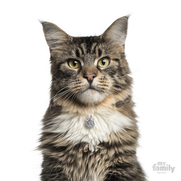 My Family Pet ID Tag | Maine Coon Cat + FREE Engraving | Peticular