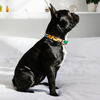 NICE DIGS Block Party Leather Dog Collar | Peticular