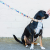 NICE DIGS Confetti Leather Dog Leash | Peticular