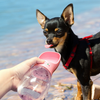 PAWZ Travel Pet Water Cup | Peticular