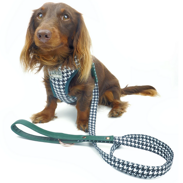 PUPSTYLE Emerald Envy Dog Harness | Peticular