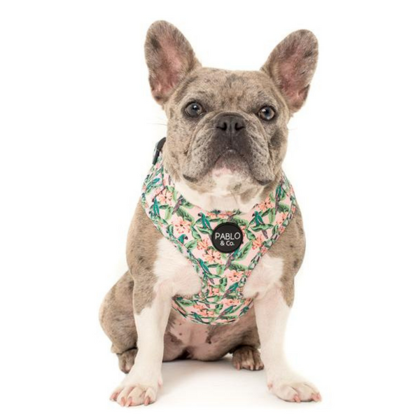 Adjustable Dog Harness | Blushing Parrots