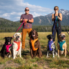 Front Range Dog Harness | 2020 Design