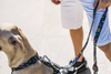 Zee.Dog Kaboom Dog H-Harness | Peticular
