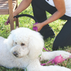 Annabel Trends Snap & Stay Dog Lead | Peticular