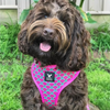 Soapy Moose Dog Harness | Hot Pink Watermelon | Peticular