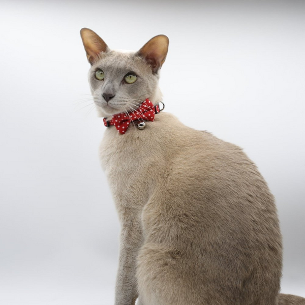 Polka Dots Cat Collar | Red