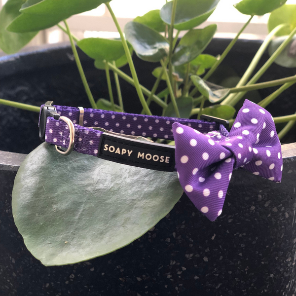 Polka Dots Cat Collar | Purple