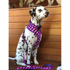 Soapy Moose Reversible Dog Harness | The Fashionista | Peticular