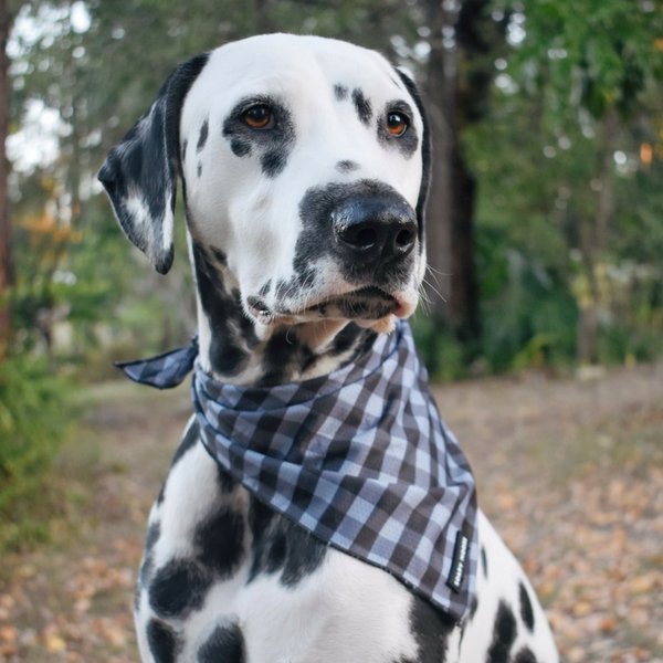 Soapy Moose Tie-Up Bandana | The Manhattan | Peticular