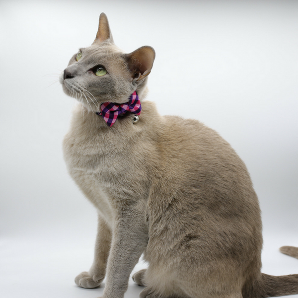 Soapy Moose The Fashionista Cat Collar | Peticular