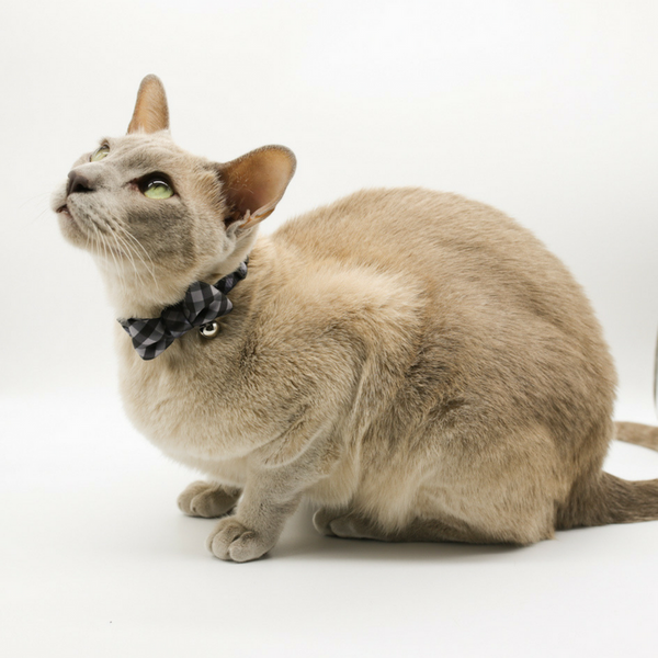 Soapy Moose The Manhattan Cat Collar | Peticular